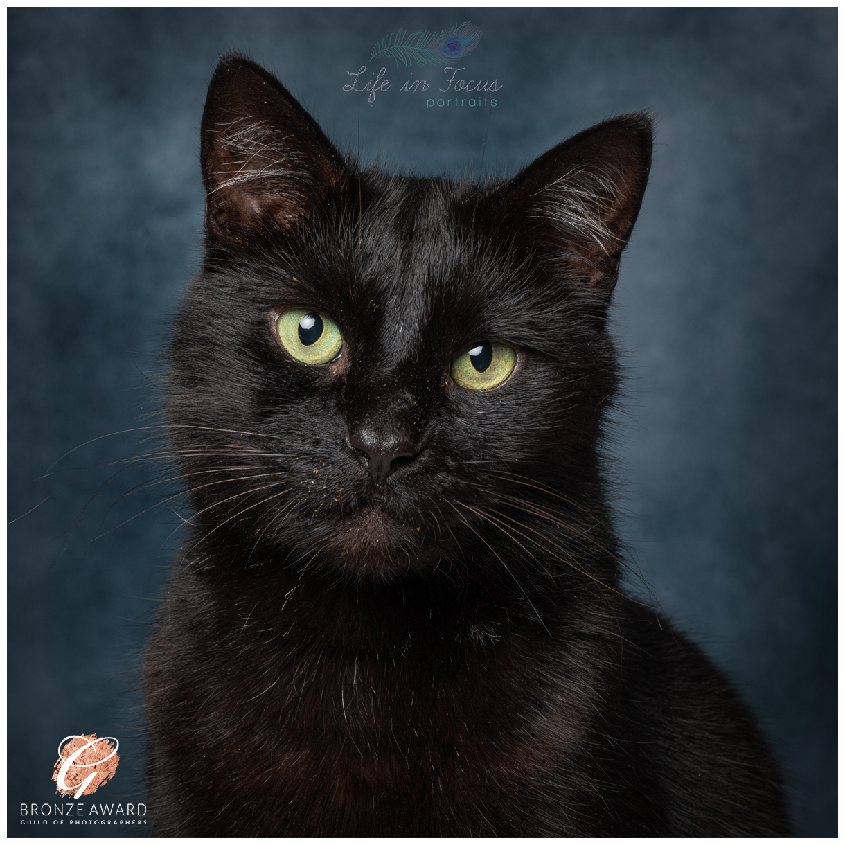 black cat with green eyes Life in Focus Portraits Award Winning pet photography studio Loch Lomond