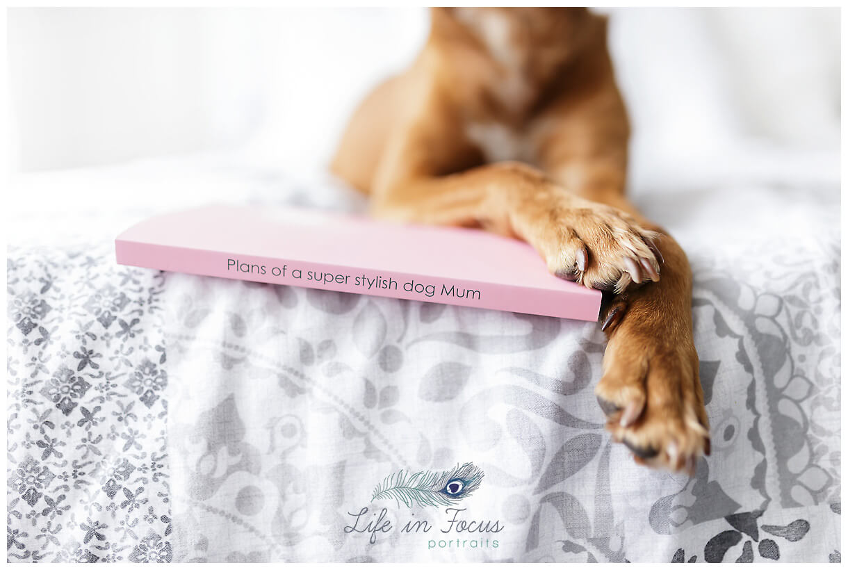pet product photography Helenburgh Life in Focus Portraits commercial product photography Helensburgh Argyll and Bute