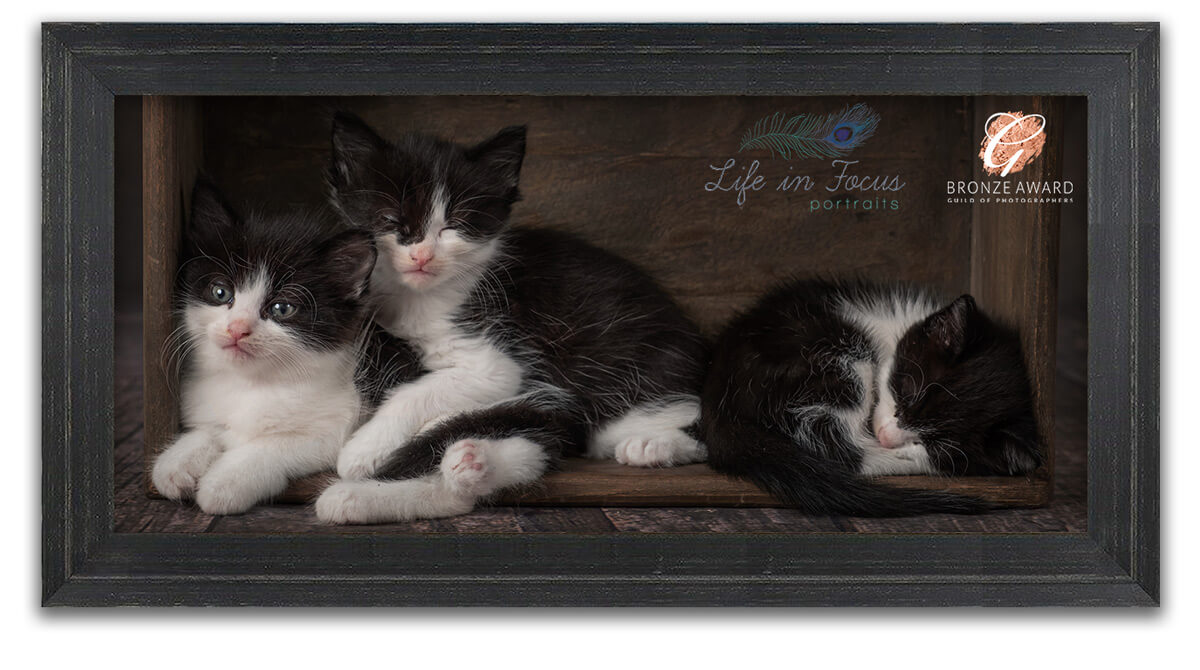framed award winning photo of kittens Life in Focus Portraits award winning pet photographer Rhu Helensburgh