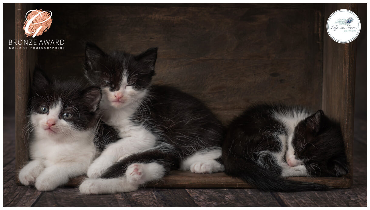 kittens huddled together in box Life in Focus Portraits award winning pet photograpy studio Rhu Helensburgh